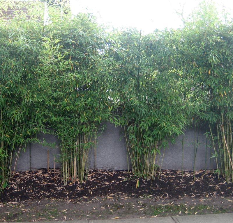 bamboo-at-concrete-wall