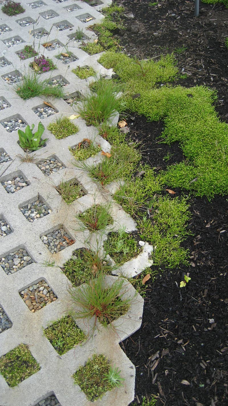 concrete-grass-pavers-edge-condition-filled-in-with-grass-and-moss