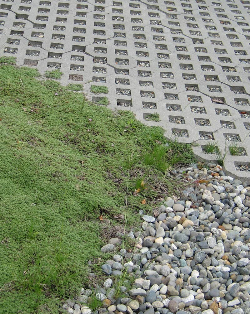 moss-and-river-rock-against-concrete-frass-pavers