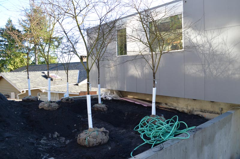 swiss-pearl-panel-application-and-trees-ready-for-planting