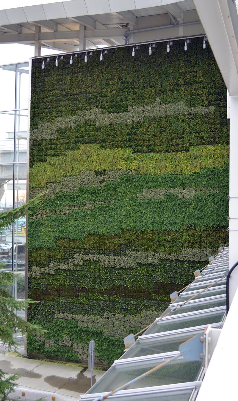 landscaping green walls home building in vancouver