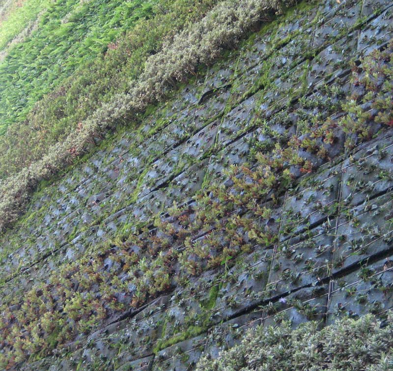 green-wall-closeup-5