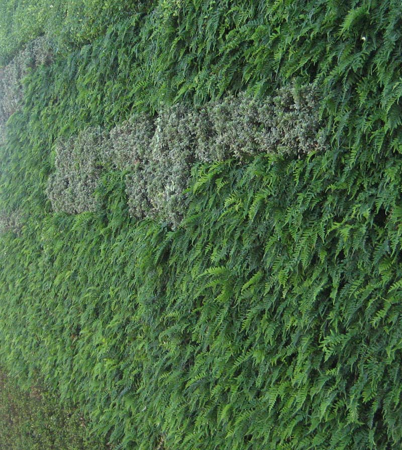 green-wall-plants_closeup