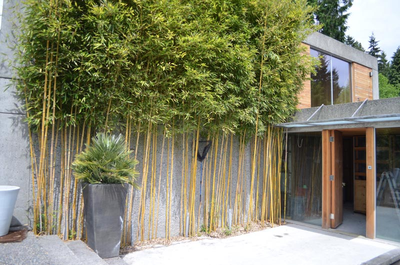 BAMBOO-WALL-AT-MAIN-ENTRY