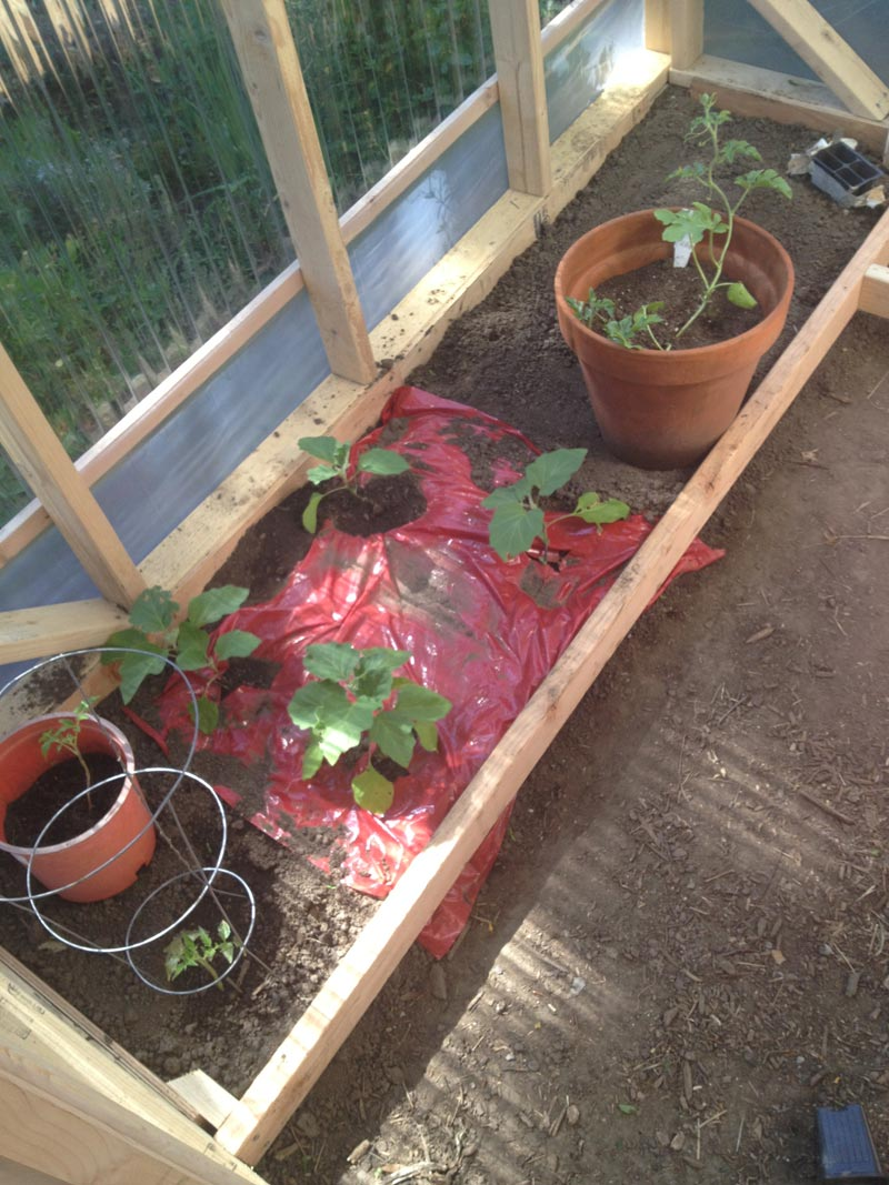 GREEN-HOUSE-CONSTRUCTION----tomatoes,-eggplans,-watermelon-